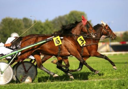 Harness.racing.resized